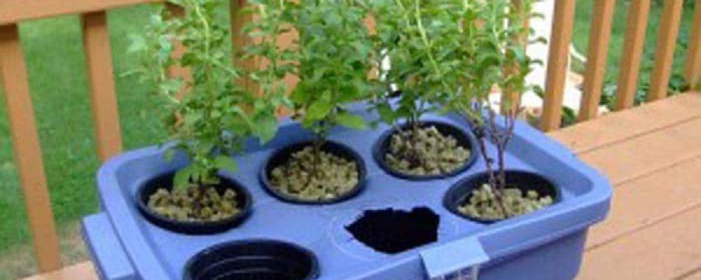 """Sudáfrica destinará 1900 millones de dólares para establecer su """"industria del cannabis"""""""