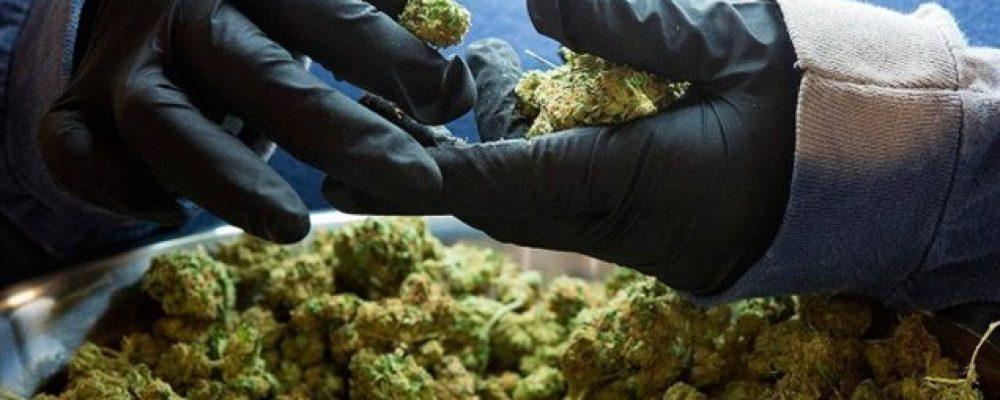 La venta de la marihuana en Quebec será un monopolio estatal