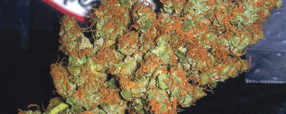 Absuelto dos veces de cultivar marihuana en casa para tratar su leucemia