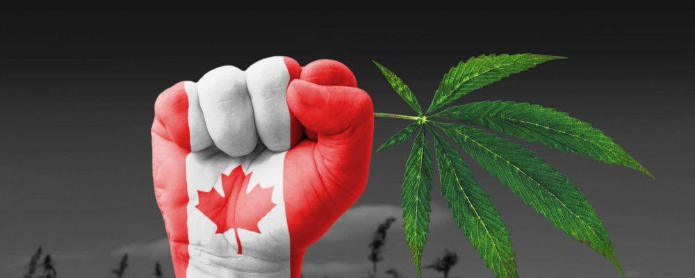 Canadá y su posible problema de escasez de marihuana