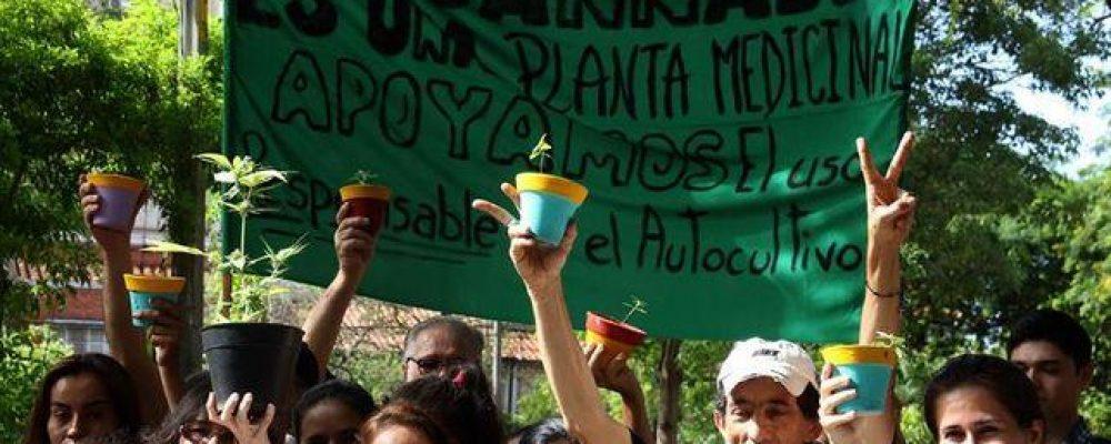 Paraguayas con hijos epilépticos presentan un amparo para el autocultivo de cannabis