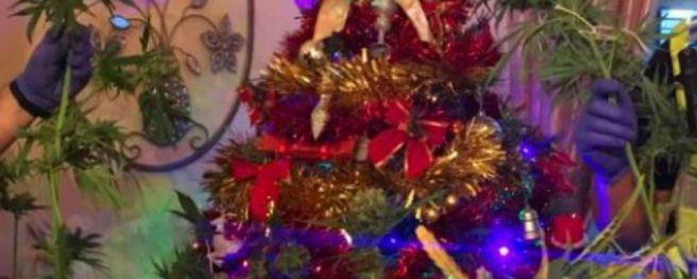 Detenidos por tener una planta de marihuana como árbol de Navidad