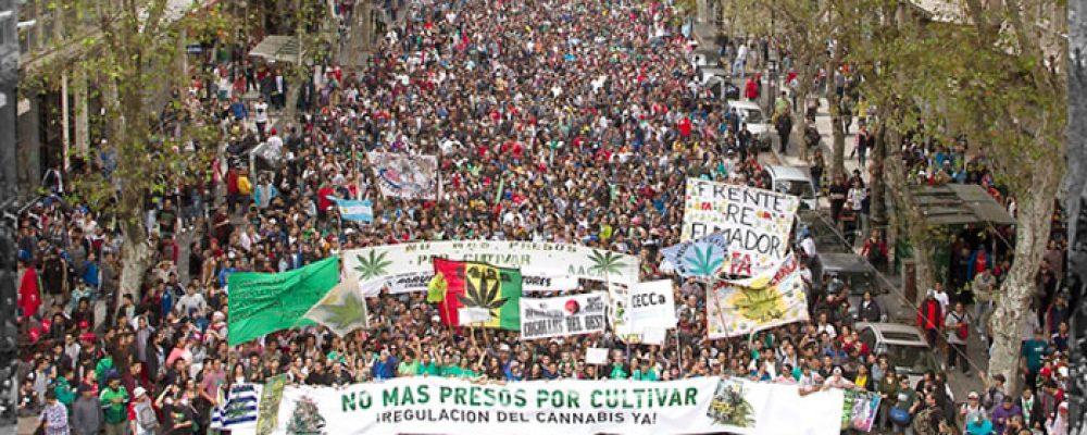 Argentina aprueba una ley que permite el uso del cannabis medicinal pero no el autocultivo