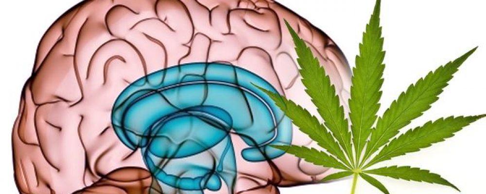 Fumar tabaco de joven aumenta el riesgo de sufrir un ictus, pero la marihuana igual no