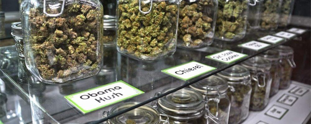 Absueltos 4 miembros de un club de cannabis que creían actuar de forma legal