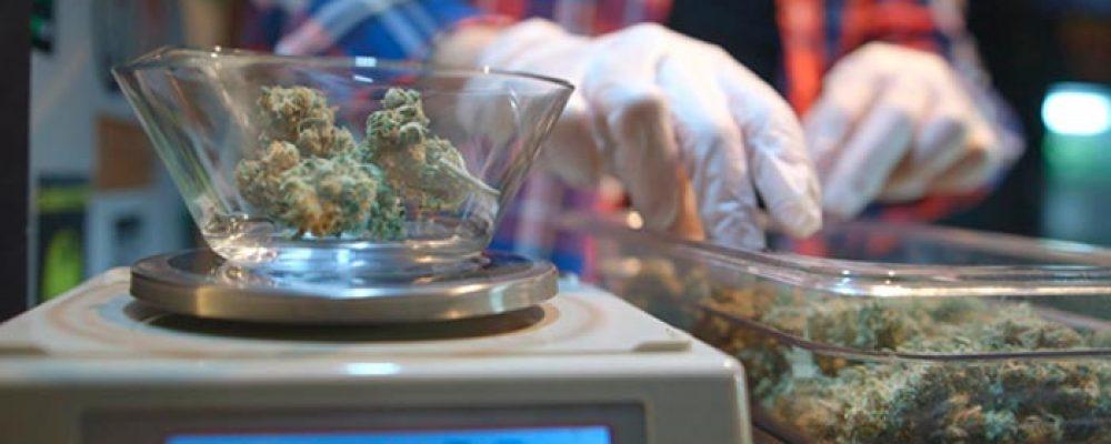 Los clubes de cannabis ya tienen una ordenanza en Alicante
