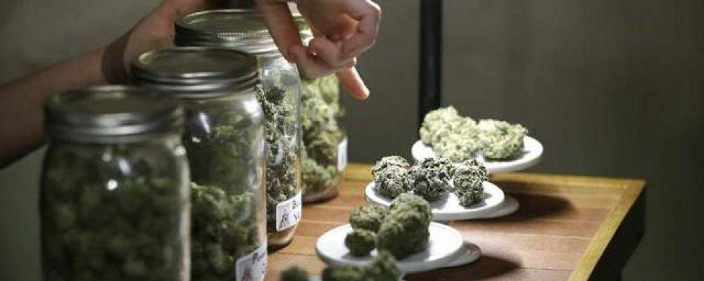 El Estado quiere que las empresas de cannabis en E.E.U.U. estén aseguradas