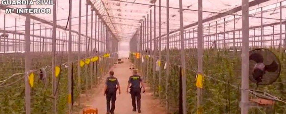 La Guardia Civil encuentra la mayor factoría de marihuana de la historia: 41.000 plantas en Almería