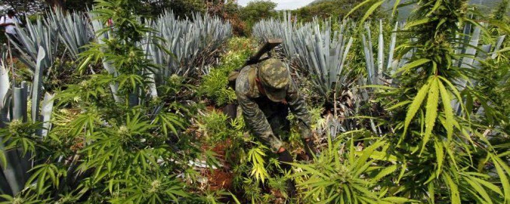 Prejuicios e ideas conservadoras atoran regulación de la marihuana en Mexico