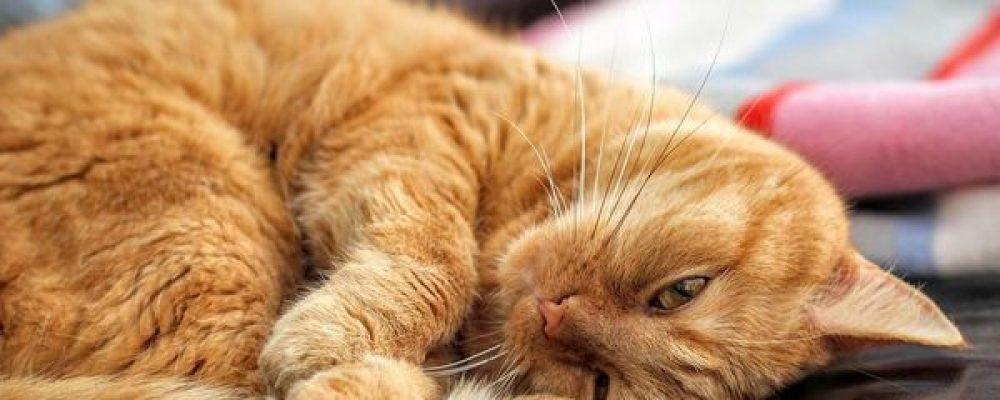 ¿Puede la marihuana terapéutica ayudar a nuestras mascotas?