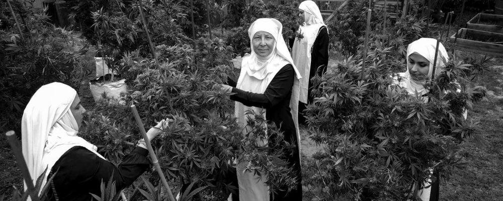 El capitalismo del cannabis toma California