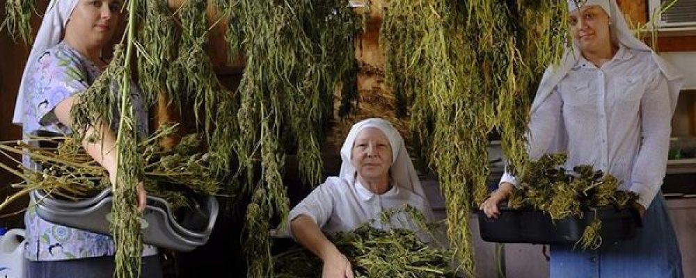 Legalizaciones, monjas promarihuana y porros gigantes: lo mejor de 2016 en el mundo del cannabis