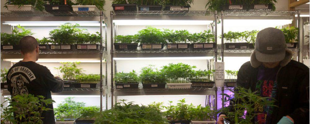 La industria de la marihuana no es tan 'verde' como suponíamos