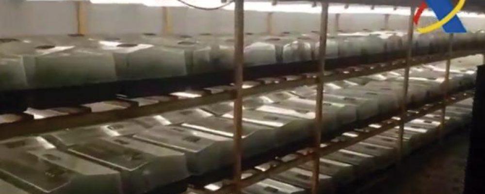 (Video) Detectada una superplantación de 135.400 plantas de marihuana en un polígono de Canovelles