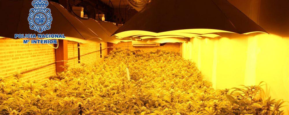 16 detenidos y 810 desenganches de luz en la primera fase del plan contra el cultivo de marihuana