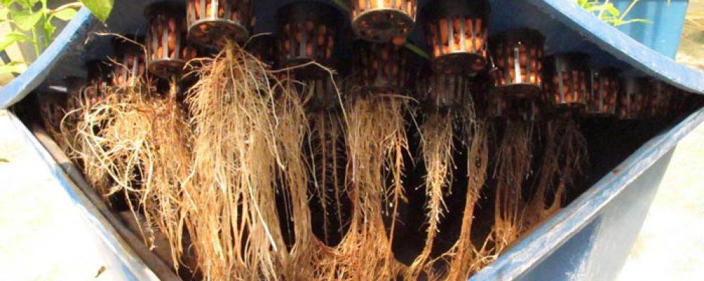 Suplementos naturales para la tierra y la hidroponía