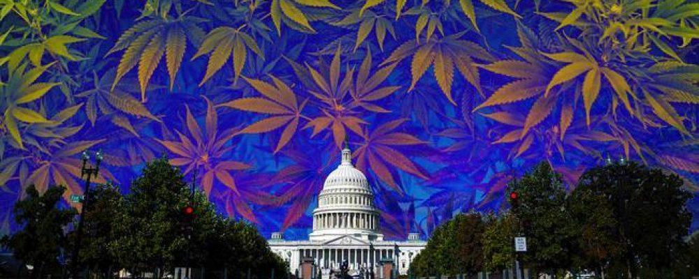 Marihuana gratis en la investidura de Trump